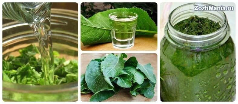 Листья хрена как средство лечения остеохондроза