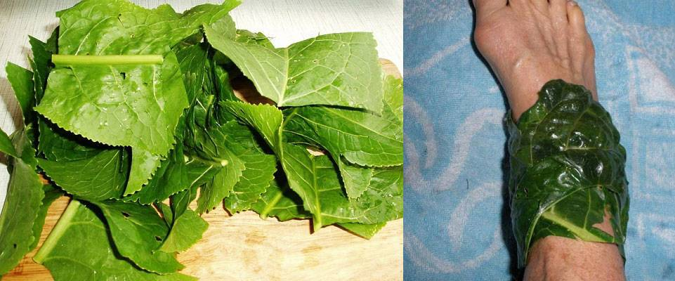 Листья хрена при остеохондрозе – как правильно применять