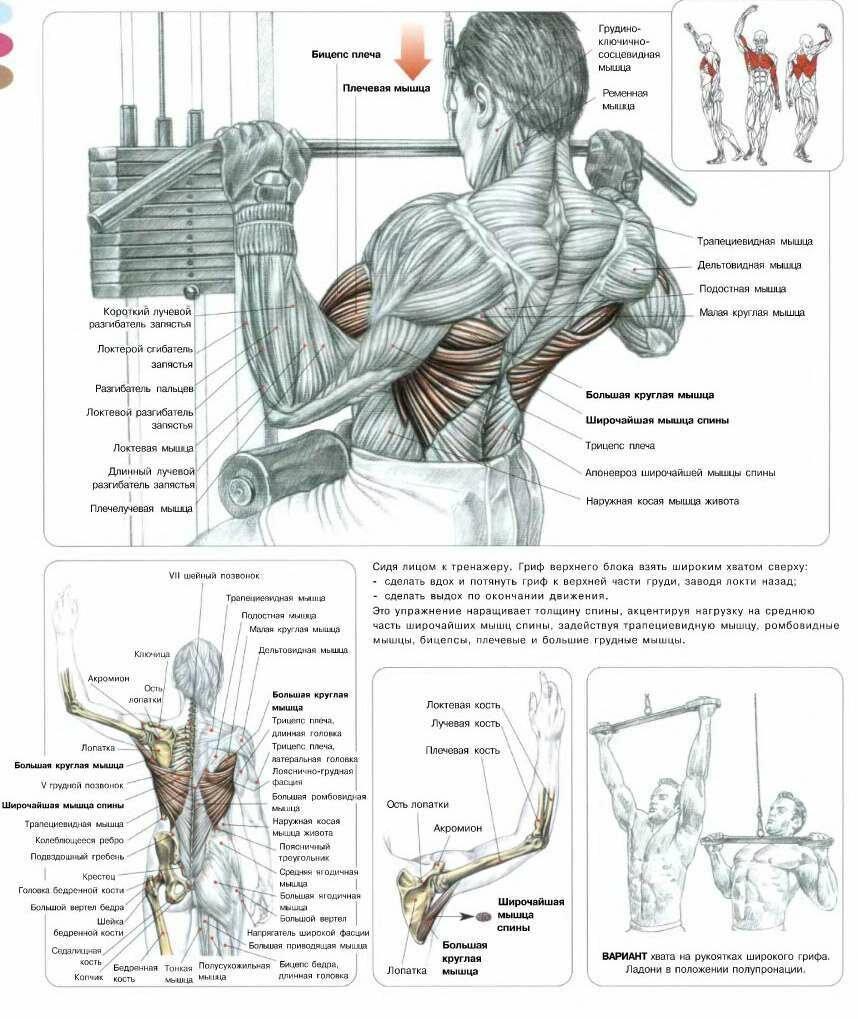 13 лучших упражнений для женщин для рельефной и сексуальной спины