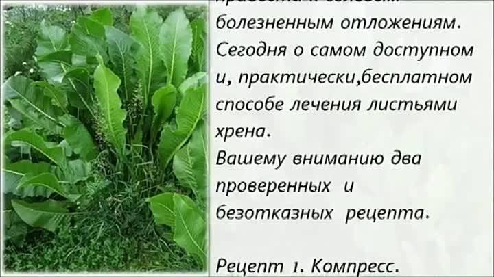 Остеохондроз и листья хрена