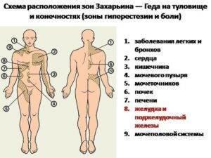 Почему болит спина в области почек?